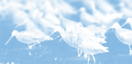 Graphic illustration of water birds with a subdued blue and white