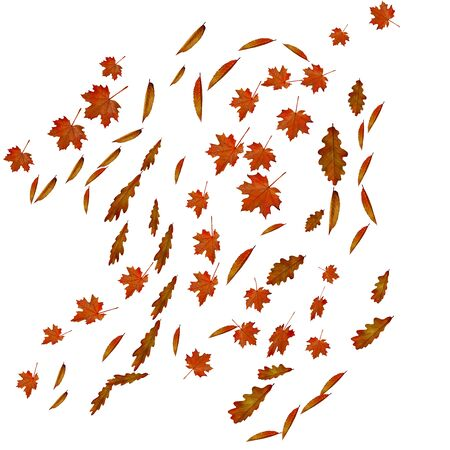 Falling autumn maple, cherry and oak leaves.