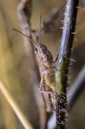 Grasshopper on the grass Stock Photo