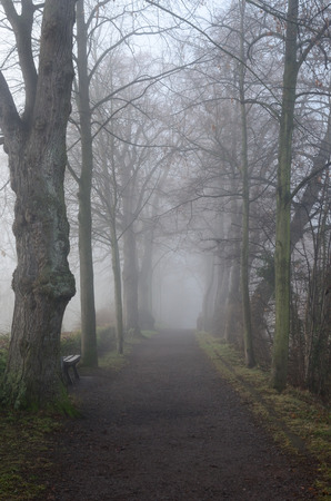 soest: Road in foggy park Stock Photo