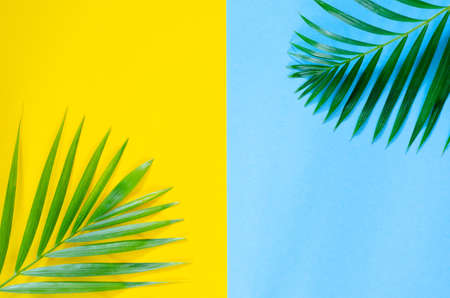 Bright colorful background with exotic painted tropical palm leaves
