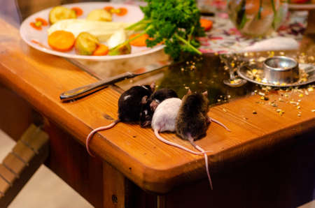 Mices on the kitchen table