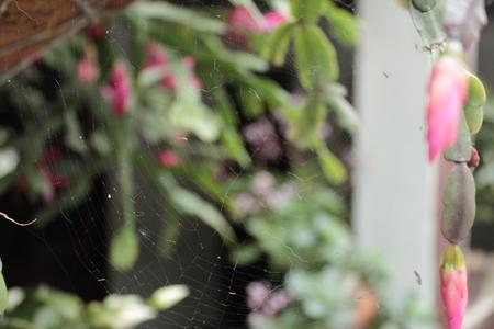 Spider web in the garden