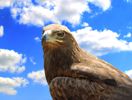 Skeptical eagle on sky background. Stock Photo