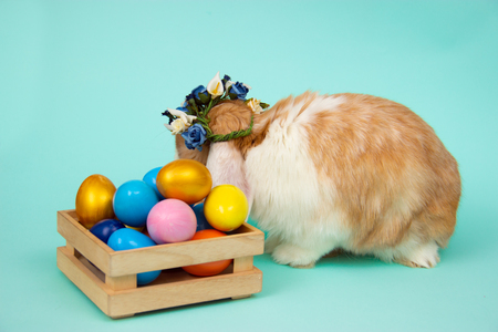 Adorable furry Easter bunny in wicker basket and dyed eggs on blue background