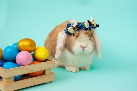 easter bunny and colorful eggs on blue background. Copy space for text.