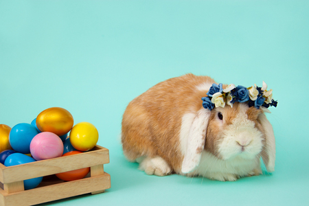 easter bunny and colorful eggs on blue background. Copy space for text