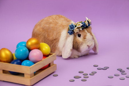 easter bunny and colorful eggs on purple background. Copy space for text Imagens