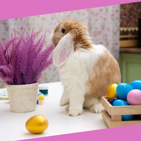 easter bunny and colorful eggs on purple flowers background provence. Copy space for text