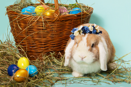 easter bunny wreath of flowers and colorful eggs on hay in basket on blue background.