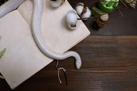 White American royal snake on the background of witchcraft accessories, alchemical instruments and ingredients. Mock up of an open magic book. herbs, mortar, feather cotton bolls. Halloween. flat lay