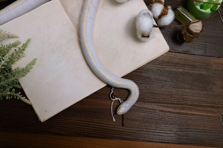 White American royal snake on the background of witchcraft accessories, alchemical instruments and ingredients. Mock up of an open magic book. herbs, mortar, feather cotton bolls. Halloween. flat lay.