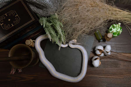 White American royal snake on the background of witchcraft accessories, alchemical instruments and ingredients. Mock up of empty tile dark slate. herbs, mortar, feather and cotton bolls. Halloween Archivio Fotografico