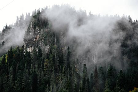 Foggy forest in mountains of Dombay ski resort, spruses and pines, Caucasus, Russian nature 免版税图像