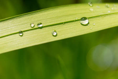 Green leaf with drop of water after rain macro close up photo