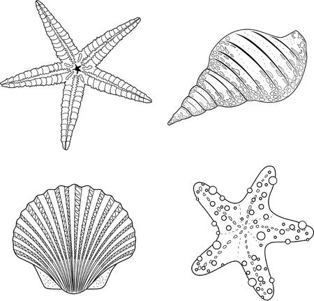 black star: Stylized shell doodle