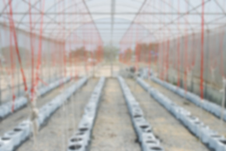 melon field: Defocus Melon in greenhouse on field agriculture
