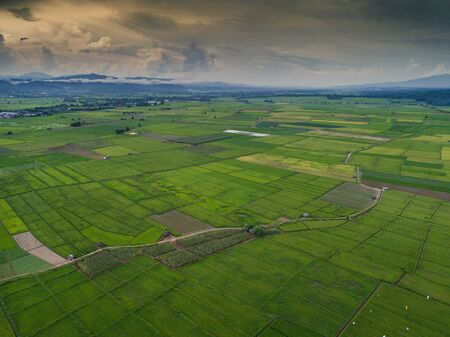 aerial view high angle view of Field in Thailand.