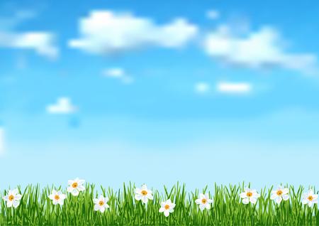 cielo azul: Fondo con la hierba y las flores blancas