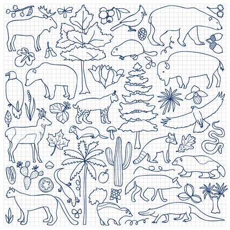 squared paper: Vector illustration with North American animals and plants on squared paper