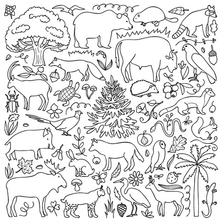 fauna: illustration with South American animals and plants