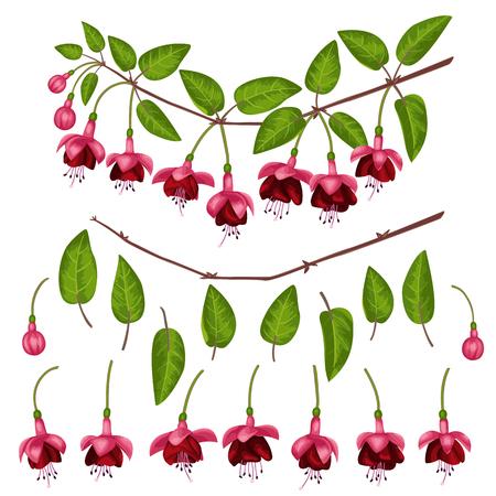 Fuchsia Elements Set
