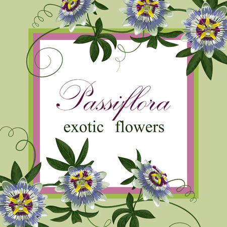 passiflora: Passiflora Exotic Postcard