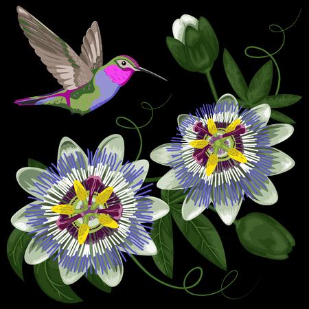 passiflora: Hummingbird and Passiflora