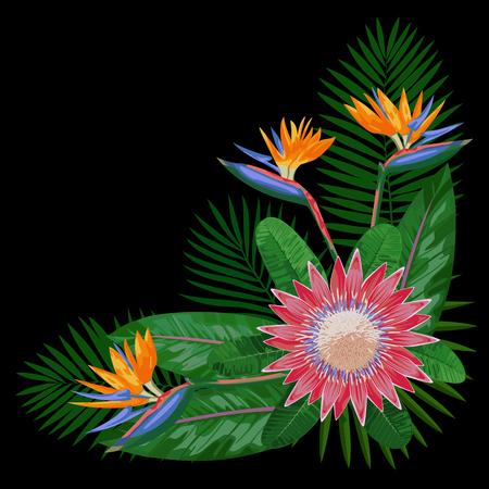 strelitzia: Tropical Bouquet CornerComposition Illustration