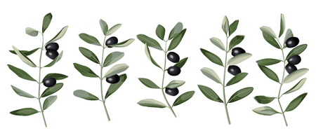 Olive Branch Set Vector illustration. Vettoriali