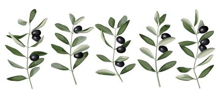 Olive Branch Set Vector illustration. Stock Illustratie