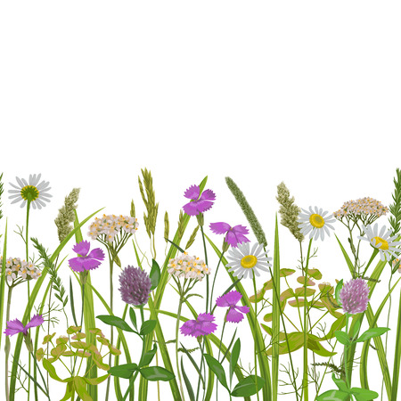 Seamless horizon border with herb and field flowers in watercolor style. Greenery botanical repeat wallpaper for textile prints, country backgrounds, alpine banner with text place and wrapping. Ilustração