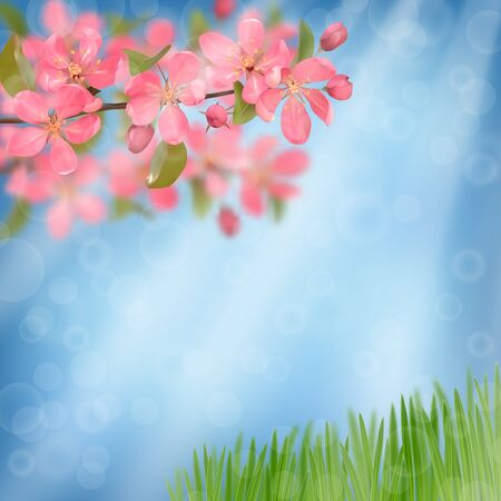 Pink blossoming cherry branches and green grass with bokeh effect