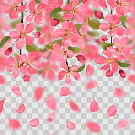 Seamless border from cherry blossom, sakura, almond flowers and falling petals with bokeh effect on transparent background. Spring repeat wallpapers, wedding invitations, romantic textile print