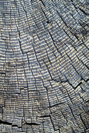 Old Gray Stump with Tree Rings photo