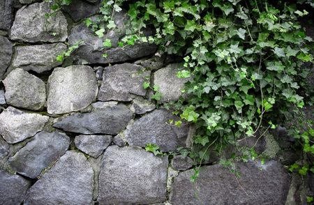 old english: English Ivy on Old Stone Wall Stock Photo