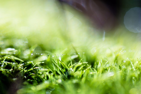Single strand of a spiderweb with water drops, over green moss with shallow depth of field and bokeh highlights Imagens