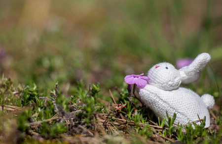 sniff: Toy stuffed rabbit posed to sniff a purple flower