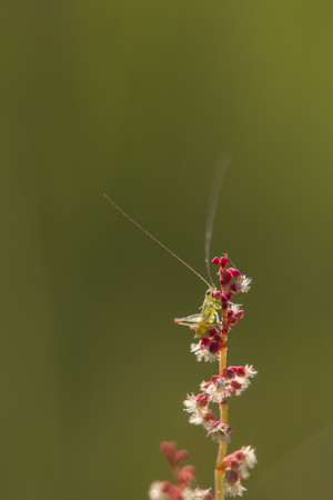 Close up of small red flowers with white stamen and a tiny green grasshopper in green backgroujnd