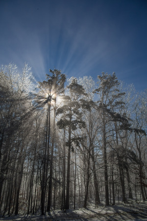 evaporating: Ice covered forest backlit by sun with flare and rays of light from evaporating ice