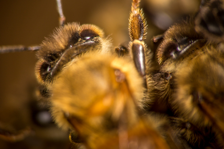 Close up showing the back of a honeybee that is swarming outside of its hive Banco de Imagens