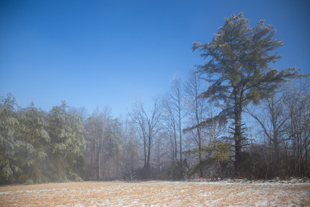 ice covered: Icy field and ice covered trees with slight mist and blue skies Stock Photo