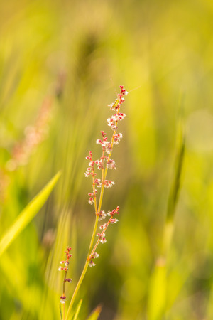 Stem of small red flowers with white stamen in grass with artistic bokeh
