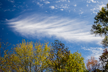 feature: Cloud textured like a feature on blue skies above green trees