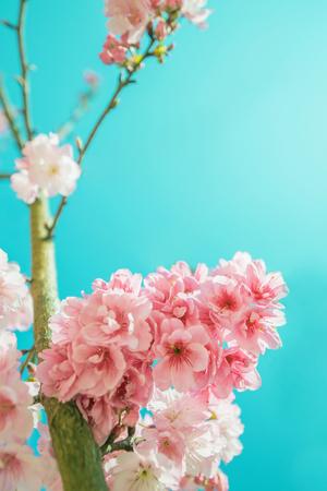 Close up to sakura on blue background