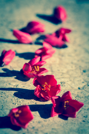 gules: Close up view of red flowers on the floor