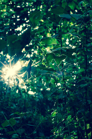 penetrate: Sunlight penetrate through the trees and leaves