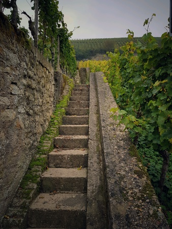 Staircase to the top of a vineyard in autumn
