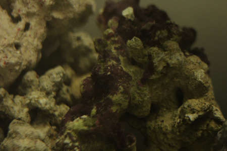 Close Up of Live Rock in Saltwater Tank 免版税图像
