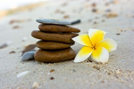 Temple tree flowers lying on the beach Stock Photo - 4758947